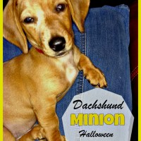 Your Wiener Wants a Dachshund Minion Costume