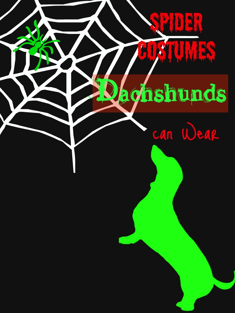 A Dachshund Spider Costume for your Little Hallowiener