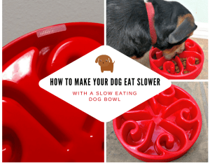 How to Make your Dog Eat Slower with a Slow Eating Dog Bowl