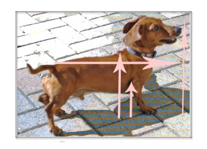 How to measure a Dachshund