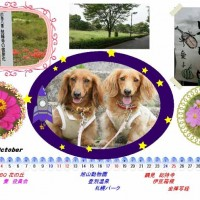 来月の愛犬暦を作りました