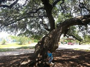 A great climbing tree