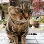 デイサービスの猫