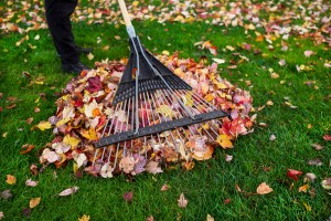 Cleaning up Yard during Autumn
