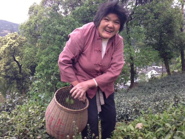 Madame Xu's tea picker