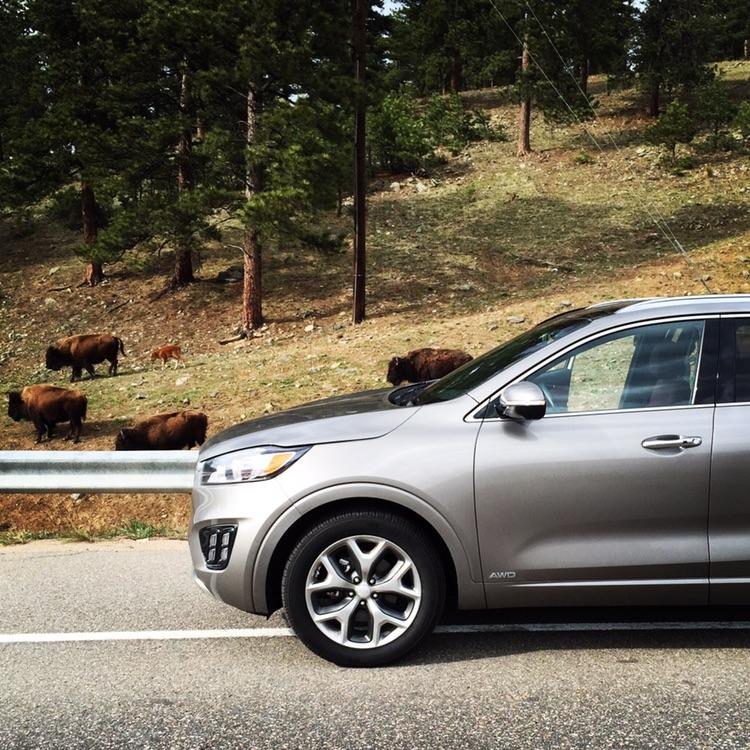 car w bison