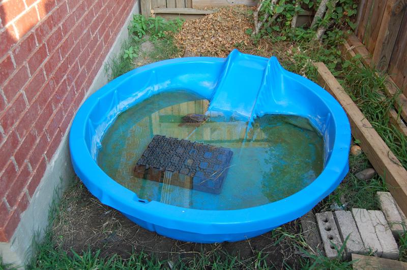 Pet Turtle Pond With DIY Filter - Daddykirbs Farm