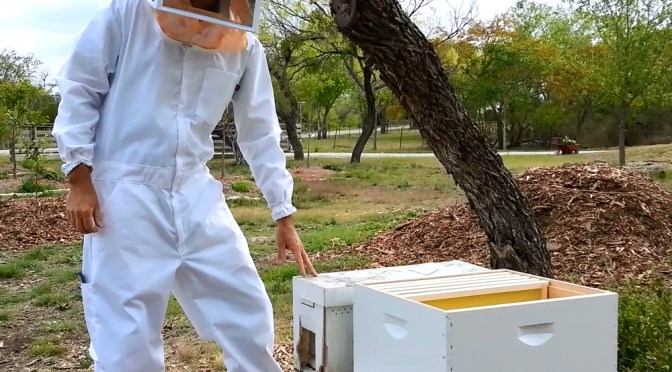 Beekeeping: Some of Our First Moments