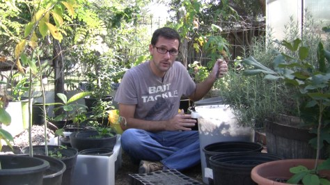 How To Make Compost Seed Starting Soil 01