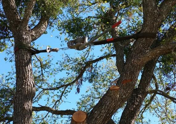 How To Repair Split Trees