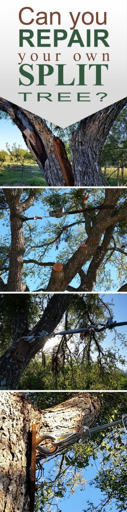How To Repair Split Trees