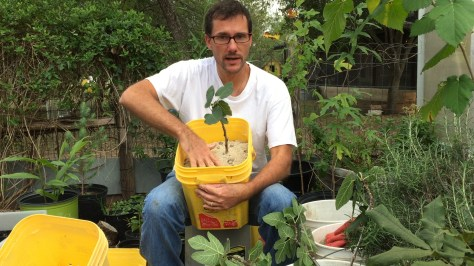 How To Propagate Fig Trees