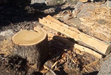سلطات تونفيت تحارب مهربي الأشجار