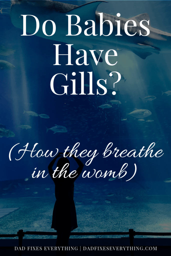 Do Babies Have Gills in the Womb?
