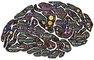 Brain, knowledge