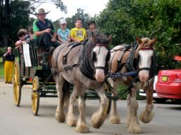 horse and cart rides