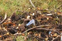debris thrown ashore