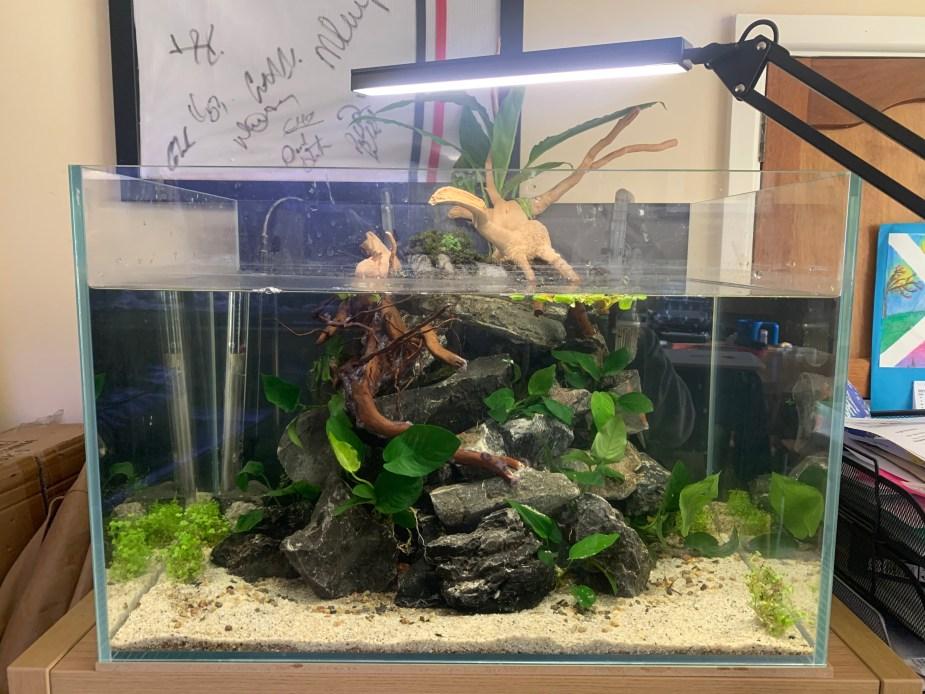 Desk aquarium with peace lilly
