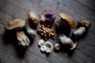All mushrooms have healing powers.