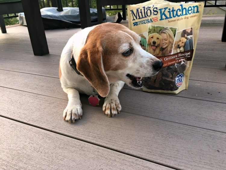 Is it possible to teach two Old Dogs New Tricks? I think it is especially when you tempt them with a great treat like Milo's Kitchen home-style dog treats.