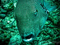 Diving, Sulawesi