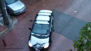 Χιονισμένη Δάφνη (29.12.2016)