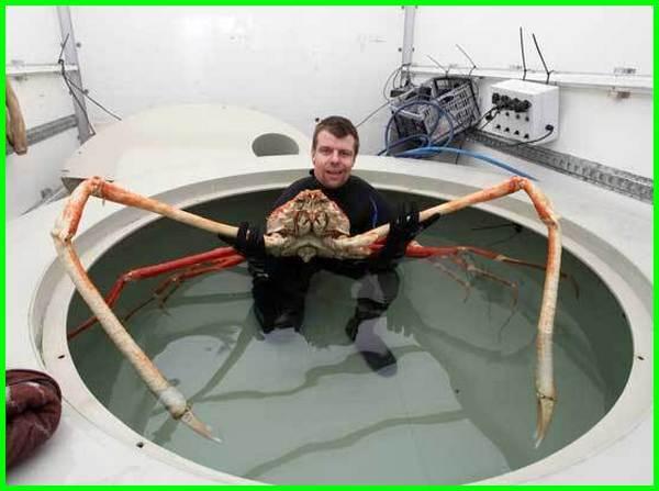 hewan laut aneh dan misterius, hewan aneh di laut, hewan aneh di laut terdalam, hewan aneh dasar laut, hewan aneh di dasar laut, hewan aneh di bawah laut, foto hewan laut aneh, hewan paling aneh di laut