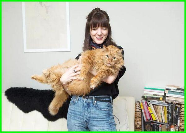 manfaat memelihara kucing adalah, manfaat memelihara kucing anggora, manfaat memelihara anak kucing, manfaat memelihara kucing dunia akhirat, manfaat pelihara kucing bagi kesehatan, manfaat kucing bagi wanita