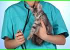 penyakit kucing pada manusia, penyakit kucing yang bisa menular ke manusia, penyakit jamur kucing pada manusia, penyakit kucing untuk manusia, penyakit virus kucing pada manusia, penyakit kucing yg dapat menular ke manusia