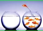 mimpi ikan mas, mimpi ikan mas togel, mimpi dikasih ikan mas, arti mimpi ikan mas, tafsir mimpi ikan mas togel, mimpi ikan mas merah togel, no mimpi ikan mas, 1000 mimpi ikan mas, mimpi 2d ikan mas, mimpi 3d ikan mas, mimpi 4d ikan mas 4d mimpi ikan mas
