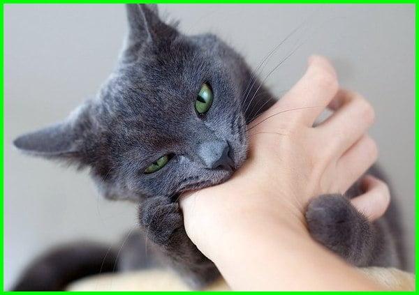 arti kucing menggigit tangan kita, cara agar kucing berhenti menggigit, kucing suka menggigit dan mencakar, kucing mengeong dan menggigit, anak kucing suka menggigit dan mencakar, fakta kucing menggigit, kenapa kucing menggigit manusia, kucing suka menggigit tangan kita, kucing menggigit tangan kita, cara mengatasi kucing yang menggigit