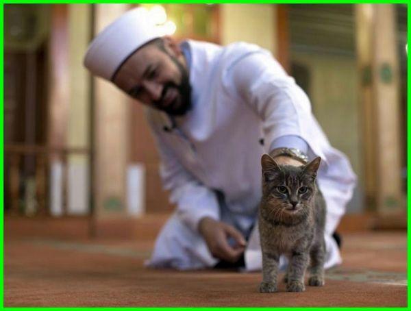 nama kucing rasull, kucing peliharaan rasul, kucing dan rasul, nama kucing baginda rasul, kucing rasul, kenapa kucing disayang rasul, kisah kucing dan rasul, rasul memelihara kucing, rasul dan kucing, rasul penyayang kucing, ketika kucing rasulullah mati, jenis kucing peliharaan rasul, kucing rasulullah mati