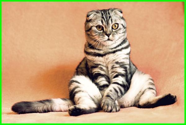 10 Nama Kucing Islami Yang Bagus Beserta Artinya Daftarhewan Com