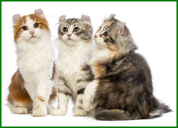 jenis kucing kecil didunia, jenis kucing yang kecil terus, jenis kucing ras kecil, jenis kucing kecil imut, jenis kucing bertubuh kecil, jenis kucing berbadan kecil, jenis kucing badan kecil, jenis kucing bertelinga kecil, jenis kucing yang badannya kecil
