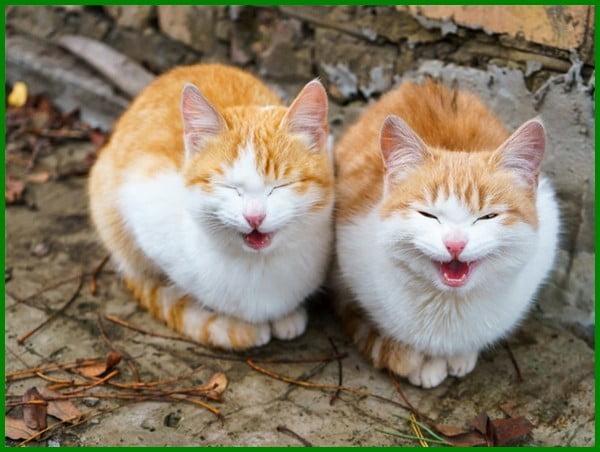 mengapa kucing mengeong ngeong terus, kucing mengeong terus, kucing mengeong serak, kucing mengeong aneh, kucing mengeong keras di malam hari, kucing mengeong ingin keluar rumah, kucing mengeong artinya, kucing mengeong pertanda apa, kucing mengeong sepanjang hari, mengapa kucing mengeong, kenapa kucing mengeong, isyarat kucing mengeong, kenapa kucing mengeong ngeong, penyebab kucing mengeong ngeong