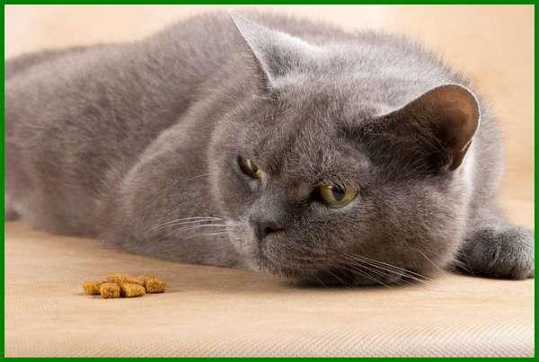faktor kucing tidak mau makan, kucing sakit gigi tidak mau makan, kucing tidak mau makan apa penyebabnya, kucing tidak mau makan dikasih apa, kucing tidak mau makan tapi aktif, kucing tidak mau makan sakit apa, penyebab kucing tidak mau makan apa, kucing tidak mau makan hanya minum saja, kucing tidak mau makan dan lemas, kucing tidak mau makan berhari hari, kucing tidak mau makan cat food, kucing cacingan tidak mau makan, kucing tidak mau makan di tempatnya, kucing tidak mau makan dry food, kucing tidak mau makan wet food