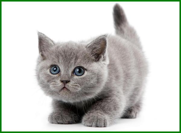 nama nama kucing korea, daftar nama kucing korea, nama kucing korea selatan, nama untuk kucing korea, nama kucing yang bagus korea, nama korea untuk kucing, nama kucing yang bagus dalam bahasa korea