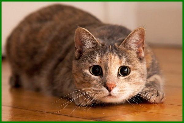 nama kucing betina korea, nama kucing lucu korea, nama kucing orang korea, nama kucing unik korea, nama kucing versi korea, nama kucing korea betina, nama kucing betina korea dan artinya, nama kucing betina lucu korea, nama korea untuk kucing betina