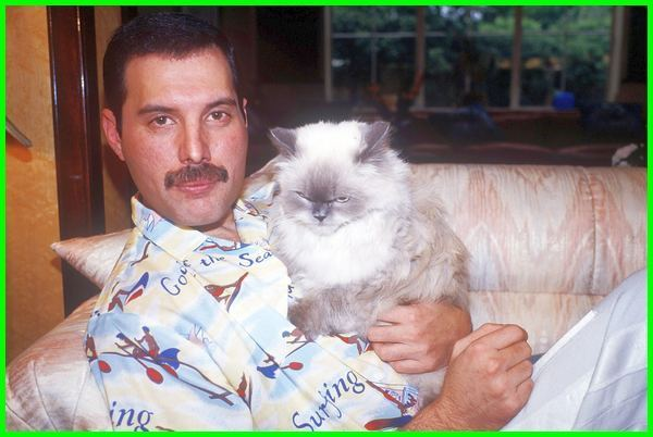 Kucing Freedy Mercury, freddie mercury cats, freddie mercury cats names, freddie mercury cats names list, freddie mercury cat song, freddie mercury's cat delilah song, freddie mercury song for cat, freddie mercury's cats names