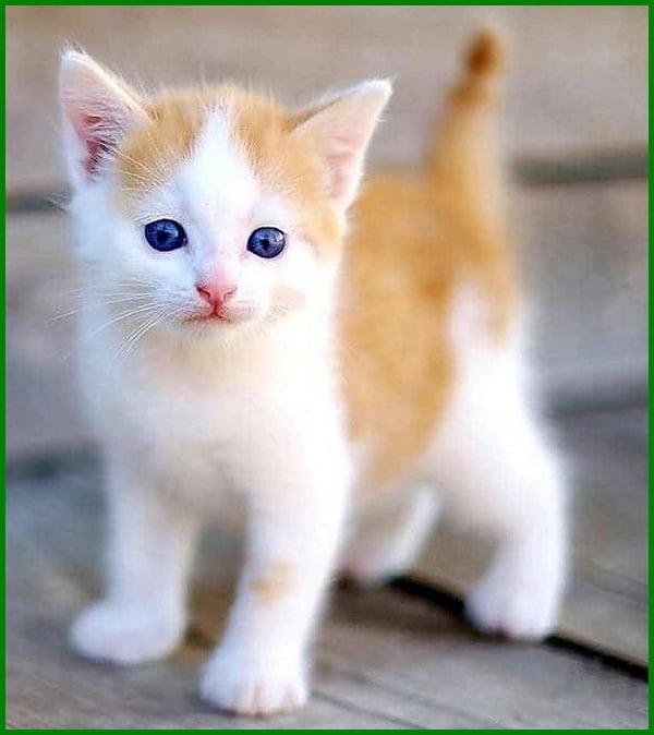 Daftar Nama Nama Kucing Korea Dan Artinya Daftarhewan Com