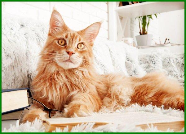 1000 Nama Kucing Perempuan Islami 81021 Nama Untuk Kucing Comel Lucu Dan Unik