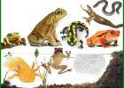 amfibi adalah, amfibi bergerak dengan cara, amfibi artinya, amfibi bergerak menggunakan, amfibi adalah hewan yang, amfibi berkembang biak dengan, amfibi adalah hewan, amfibi alat gerak, amfibi alat geraknya, amfibi alat geraknya adalah, amfibi atau amphibi, amfibi bergerak menggunakan kaki dengan cara, amfibi bernapas dengan