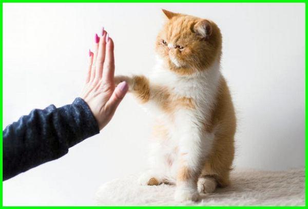 cara agar kucing nurut, cara membuat kucing nurut, cara agar kucing nurut sama kita, cara agar kucing nurut sama pemiliknya, cara bikin kucing nurut, cara supaya kucing nurut, cara biar kucing nurut, cara buat kucing nurut, cara kucing nurut sama kita, cara melatih kucing agar nurut dan pintar