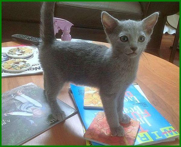 cara merawat kucing usia 4 bulan, cara merawat kucing anggora umur 4 bulan, cara merawat anak kucing umur 4 bulan, cara menjaga anak kucing 4 bulan, cara merawat kucing persia umur 4 bulan