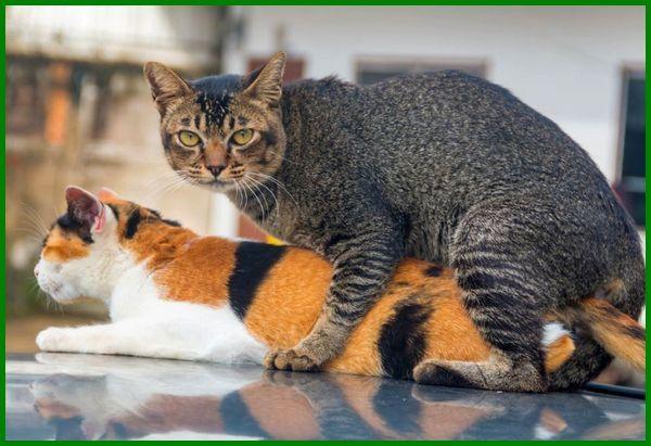 kucing berkembang biak dengan melahirkan, kucing berkembang biak dengan, kucing berkembang biak dengan apa, bagaimana kucing berkembang biak adalah, cara berkembang biak kucing adalah, cara berkembang biak kucing anggora, apa cara kucing berkembang biak, kucing berkembang biak dengan cara brainly, bagaimana kucing berkembang biak, bagaimana cara kucing berkembang biak, cara berkembang biak kucing brainly, jawaban bagaimana kucing berkembang biak, jawaban bagaimana cara kucing berkembang biak