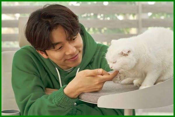 Nama Kucing Peliharaan Artis Korea Daftarhewan Com