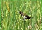 burung pemakan biji-bijian adalah, burung pemakan biji bijian di indonesia, burung pemakan biji bijian memiliki paruh yang, burung yg termasuk hewan pemakan biji-bijian adalah, bentuk paruh burung pemakan daging dan pemakan biji-bijian adalah, jenis burung pemakan biji bijian di indonesia, daftar burung pemakan biji bijian, contoh burung pemakan biji-bijian, foto burung pemakan biji bijian