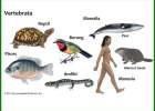 hewan vertebrata yaitu, hewan vertebrata adalah kelompok hewan bertulang belakang, hewan vertebrata adalah brainly, hewan vertebrata apa aja, hewan vertebrata adalah dan contohnya, hewan vertebrata brainly, hewan vertebrata beserta alat gerak dan fungsinya, hewan vertebrata berkembang biak dengan cara, hewan vertebrata bertulang belakang, hewan vertebrata contohnya, hewan vertebrata ciri ciri, arti dari hewan vertebrata, penjelasan dari hewan vertebrata, hewan vertebrata gambar