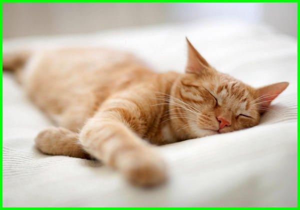 mimpi kucing togel, mimpi kucing menurut islam, mimpi kucing angka togelnya, mimpi kucing artinya apa, mimpi kucing dalam togel, firasat mimpi kucing, fakta mimpi kucing, buku mimpi hk kucing, arti mimpi kucing menurut islam, mimpi kucing kawin togel, mimpi kucing no togel, arti mimpi kucing no togel, ramalan mimpi kucing, mimpi kucing setan, www.mimpi kucing, mimpi+kucing, mimpi.kucing, 1000 mimpi kucing, 1001 mimpi kucing, mimpi kucing 4d