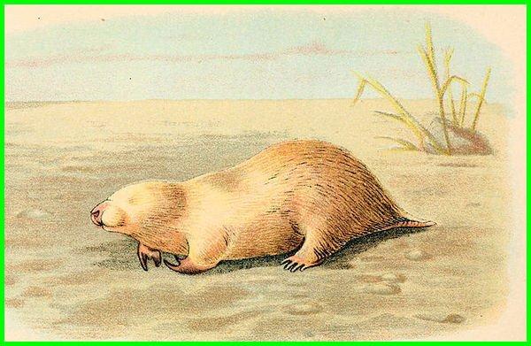 ciri ciri hewan yang hidup di gurun pasir, hewan hewan yang hidup di gurun pasir, hewan yg hidup di gurun pasir, hewan yang hidup di gurun, hewan yang hidup di padang pasir, binatang yg hidup di gurun pasir, binatang yang hidup di gurun pasir, hewan yang tinggal di gurun, hewan yang ada di gurun pasir